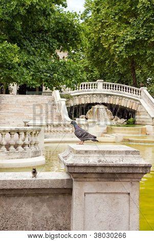 Dijon, fountain Darcy, the sparrow and the pigeon  Burgundy France