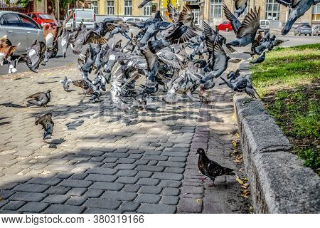 Huge Flock Of Doves Take Off From The Sidewalk In The City. Multicolored Pigeons Fly Against The Bac