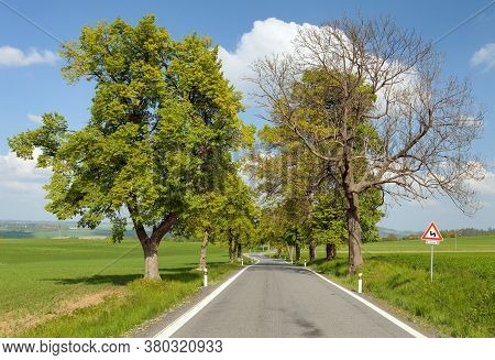 Spring Time Or Springy Alley And Road, Beautiful Springtime View