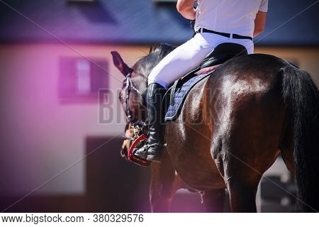 On A Beautiful Bay Horse, A Man In White Sports Clothes Is Sitting In The Saddle, Illuminated By Sun