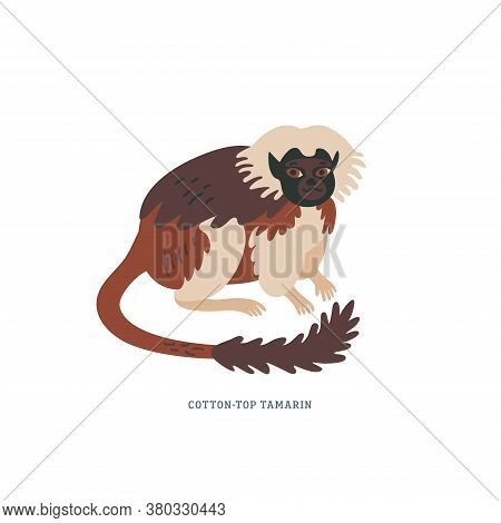 Cotton-top Tamarin Or Saguinus Oedipus - Small New World Monkey With White Crest On Head.