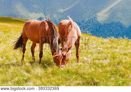 Two Brown Horses Grazing On Mountain Pasture In Carpathians