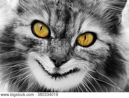 The Cat Joker With Yellow Eyes Smiles Like A Cheshire Cat. The Concept Of Fear And Nightmares.