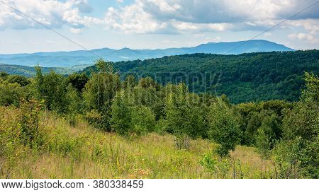 Primeval Beech Forest In Mountains. Mountain Landscape In Summer. Grass On The Meadow. Mountain Anta