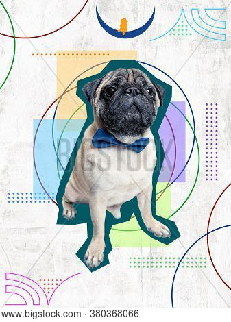 Cute Dog, Puppy In Magazine Style On Colorful Background. Negative Space To Insert Your Text. Modern