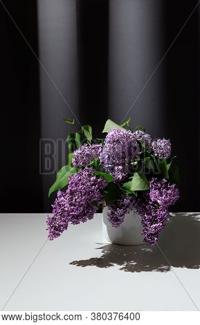 Still Life Of Bright Branch Of Lilac In The Enamel Jug On White Table On Grey Curtains Background