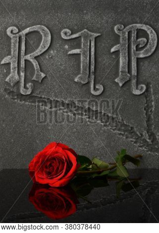 A Closeup Composition Of A Fresh Red Rose Laying Ontop Of A Gravestone To Show Love And Respect To T