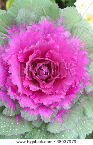 beautiful pink flower on green leaves collecting dew portrait landscape