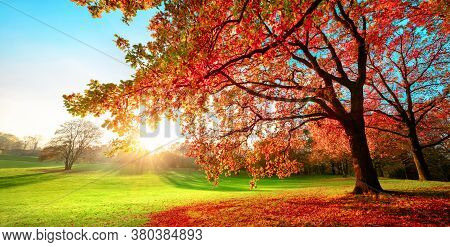 Sunny Park In Glorious Autumn Colors, With Clear Blue Sky And The Setting Sun, A Vast Green Meadow A