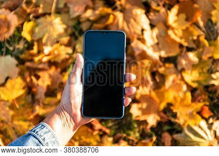 Smartphone Screen In Woman Hands, Autumn Background Colorful Leaves