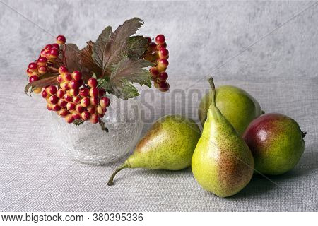 Autumn Set Of Pears With Sprigs Of Red Viburnum