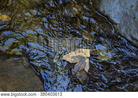 Autumn Falling Leave In Water Stream Soft Focus Dark September Season Nature Photography
