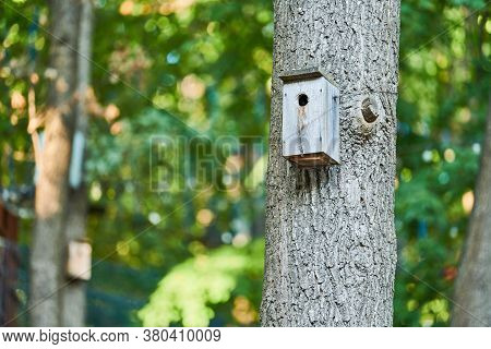Birdhouse On Maple Tree. Simple Nesting Box Design For Little Birds. Shelter For Bird Breeding