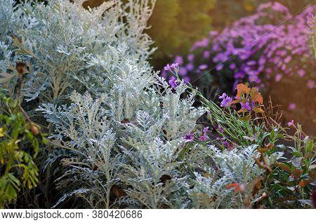 Various Flowers Blossom In Autumn Garden. Flowers In Fall Garden