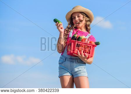 Organic Vegetables. Natural Vitamin Nutrition. Vegetables Market. Girl Cute Child Farming. Gathering