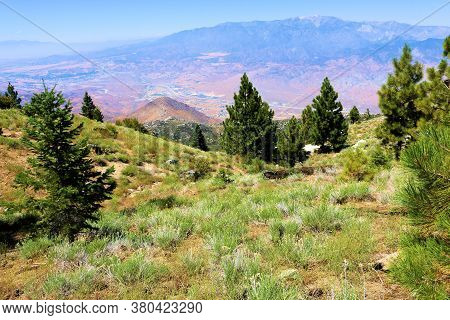 Lush Green Alpine Meadow Surrounded By Pine Trees Overlooking The Arid Desert And Mountain Ranges Ta