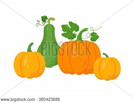 Different Tipes Of Pumpkin On White Background. Yellow, Orange And Green Pumpkin Vector Illustration