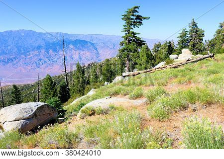 Lush Alpine Meadow Surrounded By A Pine Forest Overlooking The Arid Desert Terrain Taken From Mt San