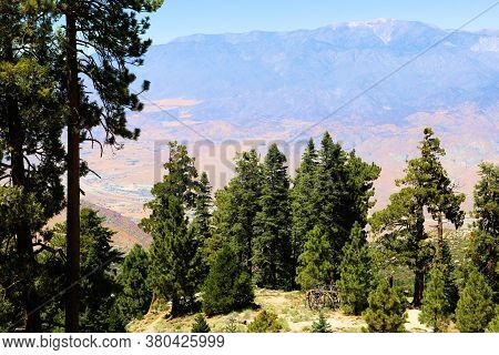 Alpine Meadows And Pine Forests On A Mountain Ridge Overlooking The Arid Desert And Mt San Gorgonio