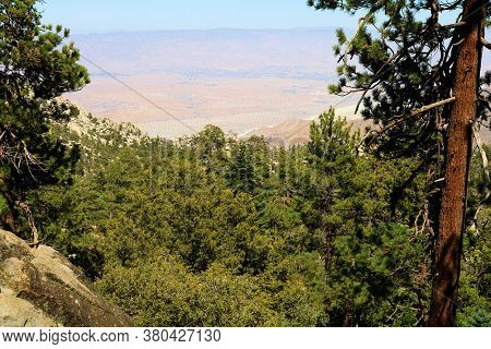 Lush Alpine Coniferous Forest Overlooking The Arid Desert Taken At Mt San Jacinto, Ca