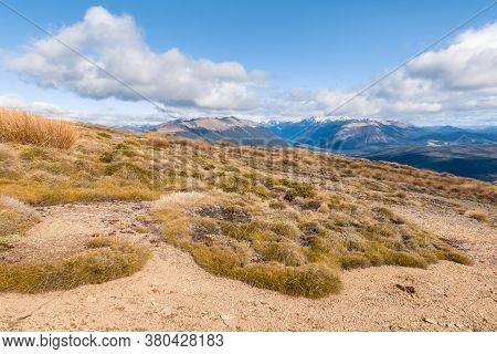 Alpine Vegetation Growing On Arid Slopes In Nelson Lakes National Park, South Island, New Zealand