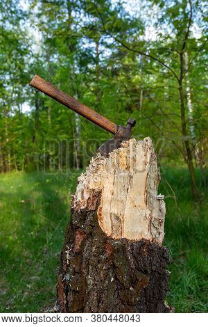Ax In A Tree. Felled Tree With An Ax Stuck In It Against The Background Of The Forest. Deforestation