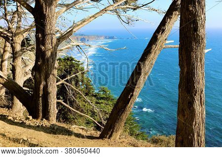 Cypress Pine Trees On A Windswept Mountain Overlooking The Pacific Ocean Taken At The Big Sur Coastl