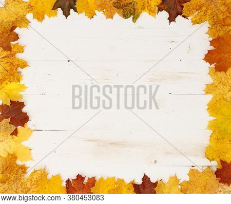 Maple Leaves Of Different Colors Lie On The Table. Frame Of Autumn Leaves. Copy Space Inside