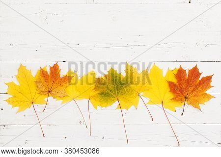 Maple Leaves Of Different Colors Lie In The Center Of The Wooden Table. Top View On Maple Leaves. Au
