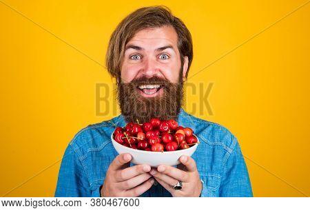 Vegetarian. Harvesting Cherries In Summer. Ripe Cherries In Pot. Delicious Dessert Dish. Bright Red