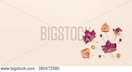 Autumn Pastel Background Made Of Leaves, Berries And Cones. Flat Lay, Top View. Banner With Copy Spa