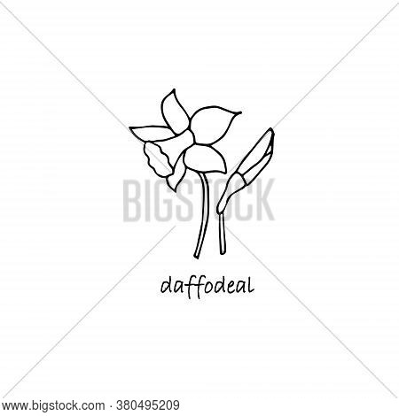Daffodil Plant Sketch. Hand Drawn Ink Art Design Object Isolated Stock Vector Illustration For Web,