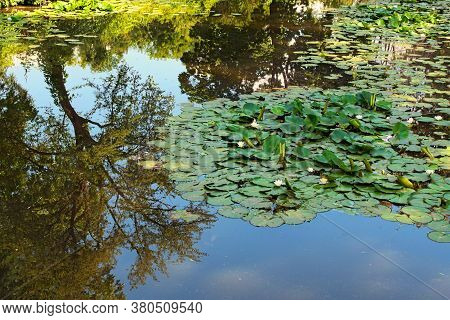 Scenic Landscape View Of Picturesque Pond With Lily Pads On The Surface. Scenic Arboretum Oleksandri