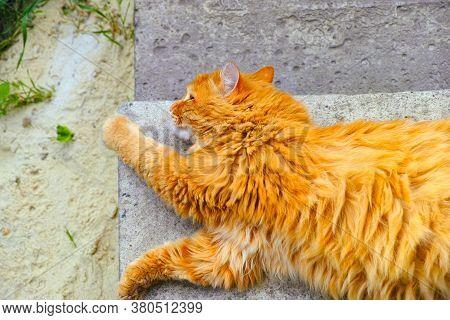 Ginger Street Cat Lying Down On The Doorstep Outside.