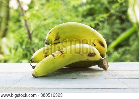 Bunch Of Yellow Bananas On The Garden Background