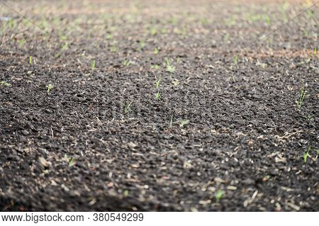 Plowed Soil. Close Up Of Arable Land Soil. Plowed For New Season. Agricultural Field Ready For Sowin