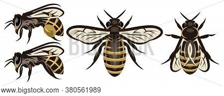 Set Of Different Bees. Design Elements. Colored Vector Illustration.