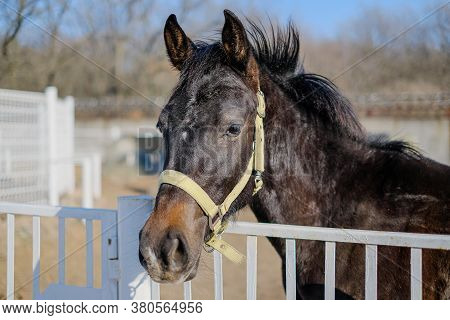 A Sports Stallion Stands In A Corral Near The Stable.