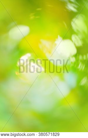 Light Green Nature Bokeh. Bokeh In Green Natural Tree Leaves Background.