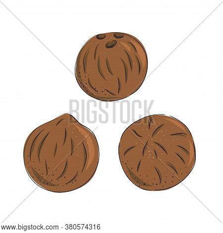 Coconut - Whole Nut Coco Pulp. Half Tropical Fruit. Vector Illustration In Hand Drawn Style.