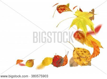 Autumn Falling Leaves Isolated On White Background. Falling Autumn Leaves