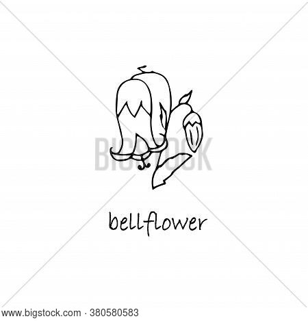 Bellflower Plant Sketch. Hand Drawn Ink Art Design Object Isolated Stock Vector Illustration For Web