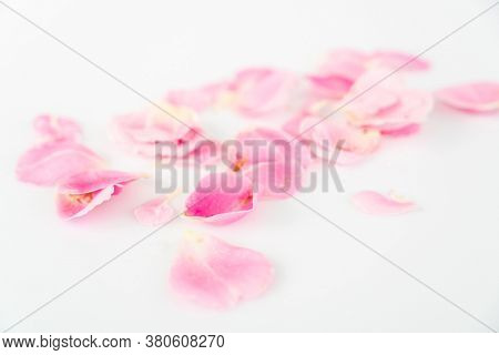 Background of beautiful rose petals. Pink rose.