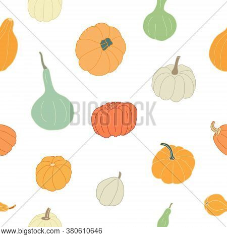 Vector Seamless Pattern With Colorful Squashes And Gourds On White Background. Great For Fabrics, Wr
