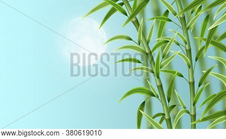 Landscape With Bamboo. Green Bamboo Stems With Green Leaves