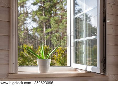 White Window In A Rustic Wooden House Overlooking The Garden, Pine Forest. Aloe Vera In White Pot On