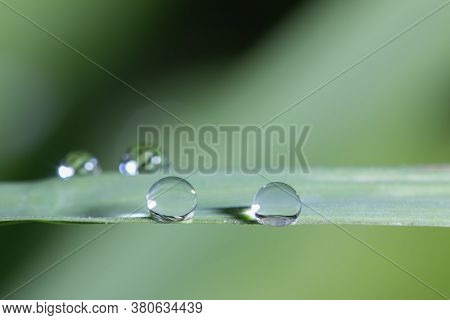 Dew Drops On Green Grass Leaf Close Up. Meadow Grass In Drops Rain, Nature Background. From Pure Wat