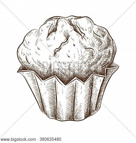 Hand Drawn Muffin Isolated On White. Sketch Of Fresh Baked Muffin In Vintage Style. Engraved Pastry
