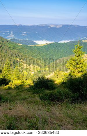 Fir Trees On The Mountain Meadow. Wonderful Morning Scenery In Summer. Fog In The Distant Valley. Ex