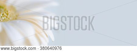 Soft focus Flower petals. Nature long horizontal background.